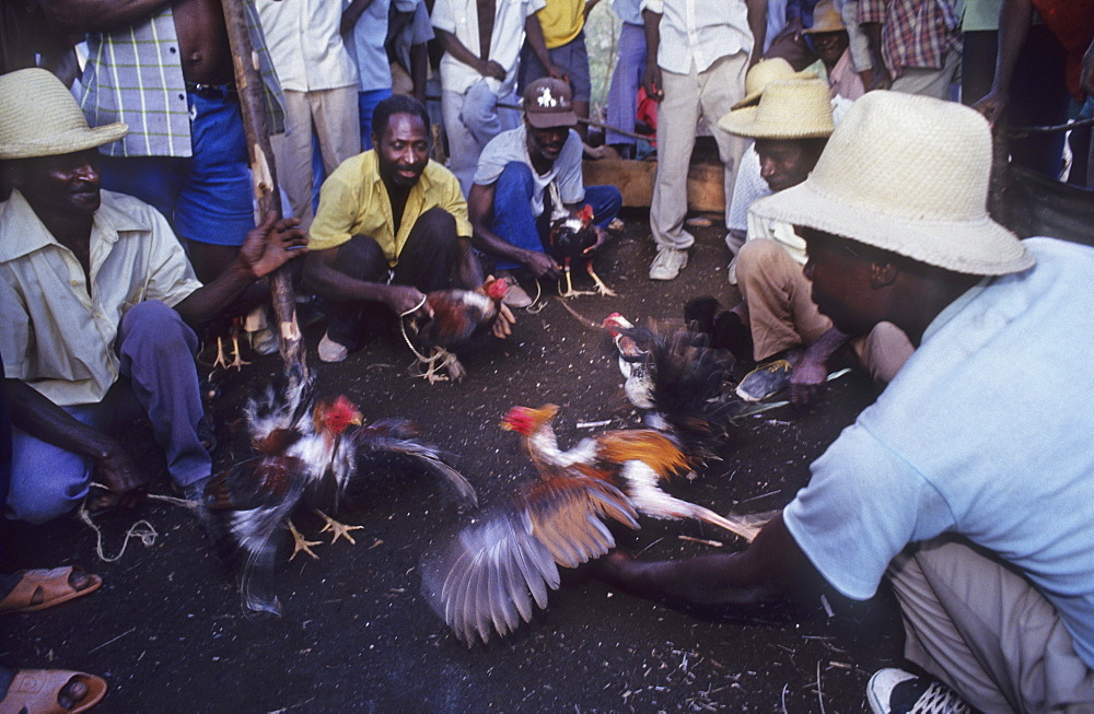 Haiti. Thomazeau village. Cock fight.