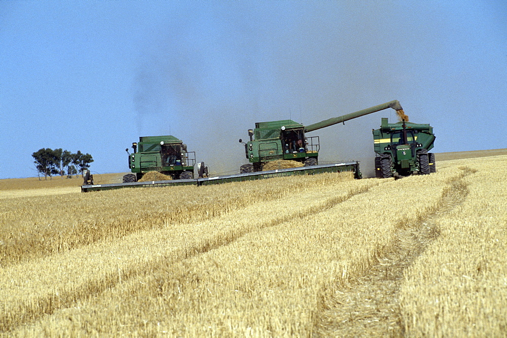 Harvest, australia. nr perth., mechanised agriculture, harvesting wheat