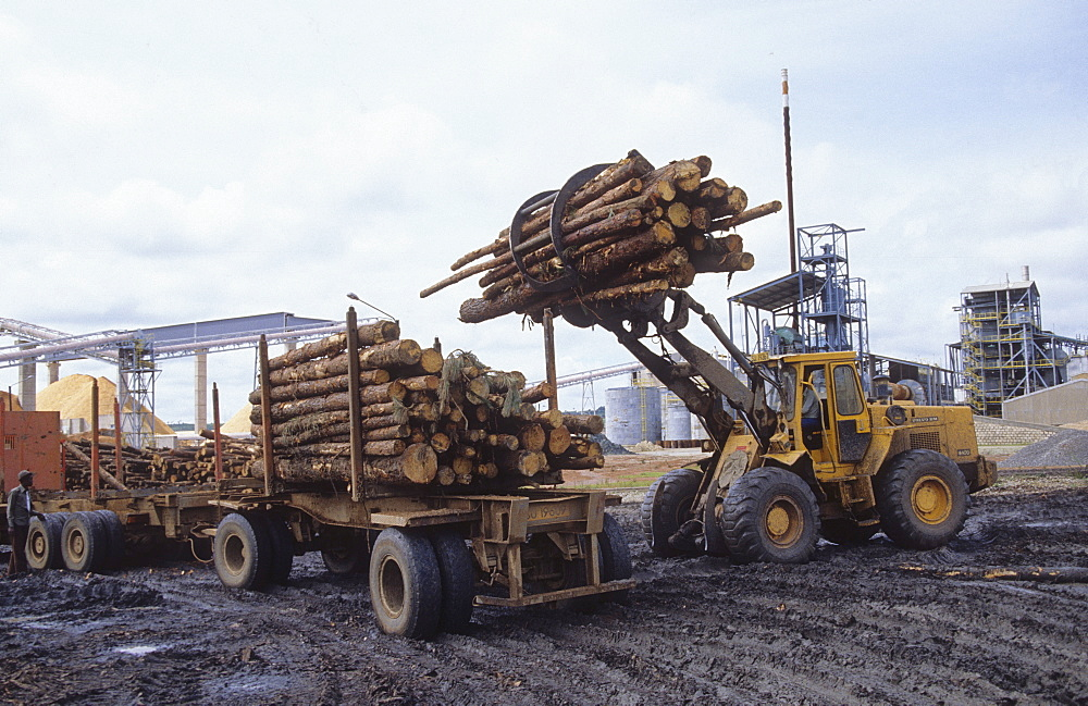 Logging, tanzania. Loading a truck to take logs to a paper mill
