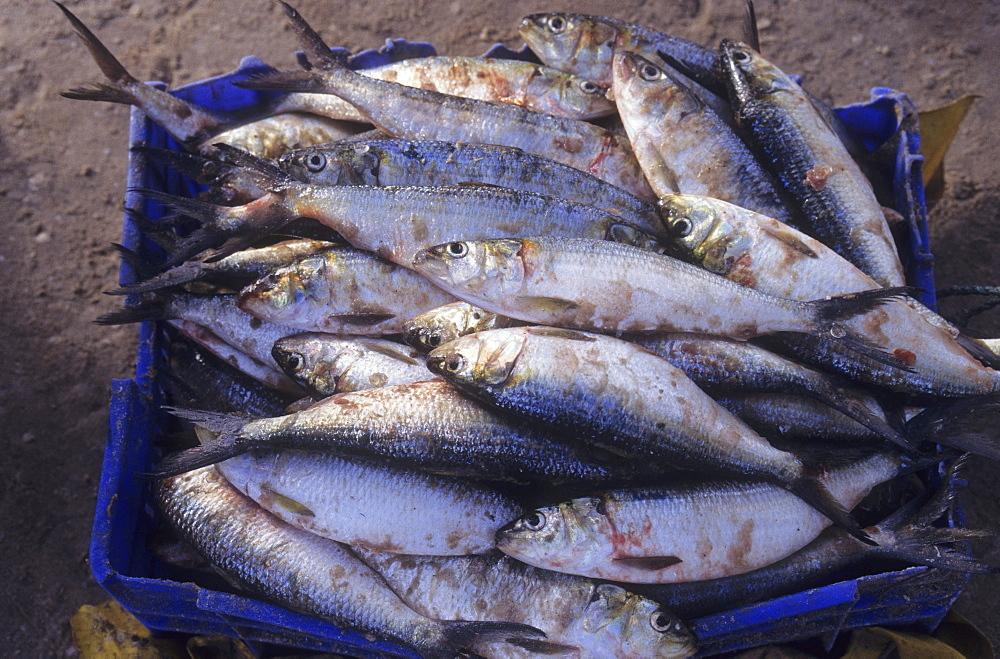 Fishermen, mauritania. Banc darguin national park. Fishcatch.