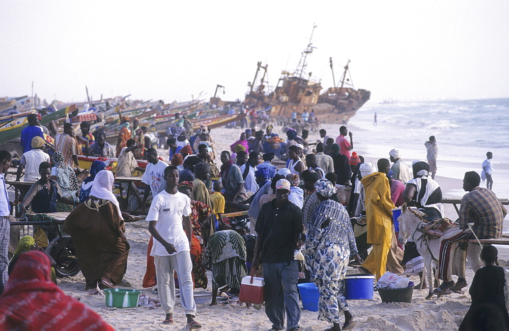 Fishing, mauritania. Nouakchott. Over fishing. Landing fish on the beach. 4,000 traditional fishing boats compete for fish, the main economic activity in mauretania.