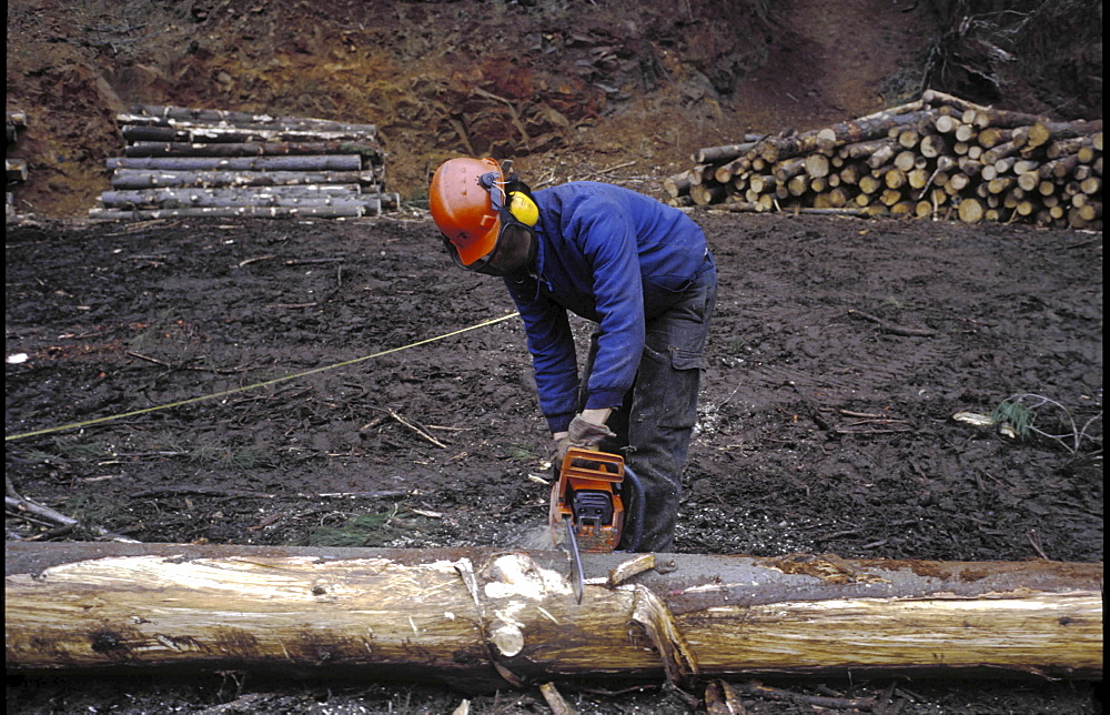 Tree logging, chile, A man cutting up trees in a forest in the south of the country