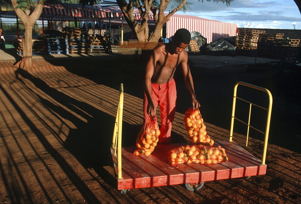 South africa packing oranges. Northern province