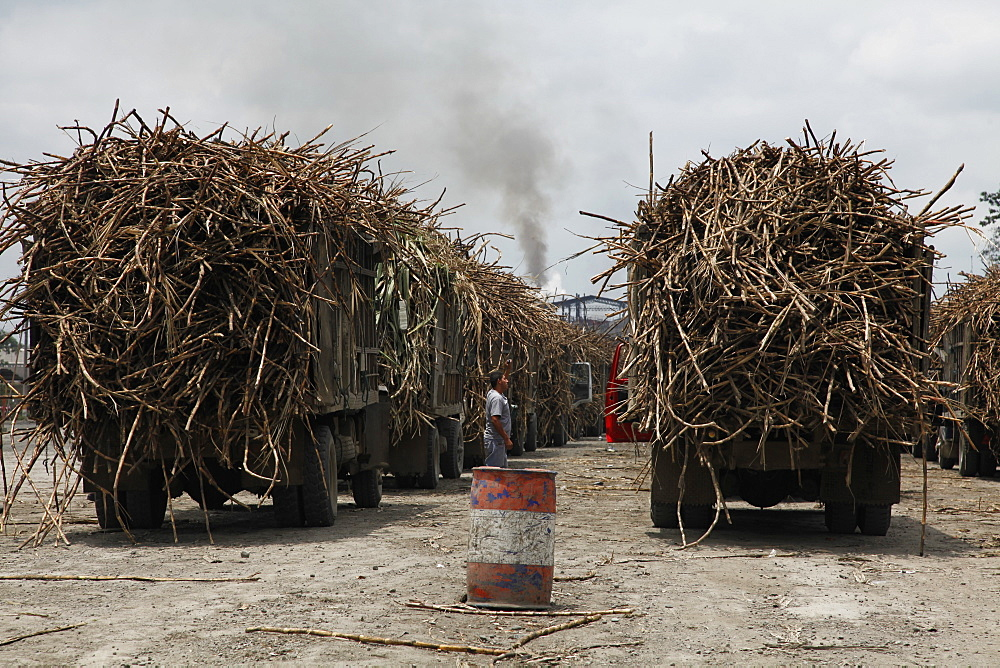 Sugar harvesting and production in the lowlands of Ecuador