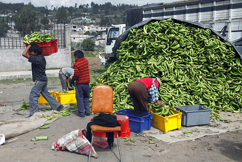 Bananas for sale on market day in the town of Riobamba in the highlands of Ecuador, South America