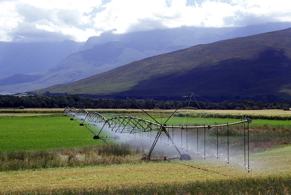 Irrigation, south africa. Eastern cape. Agriculture