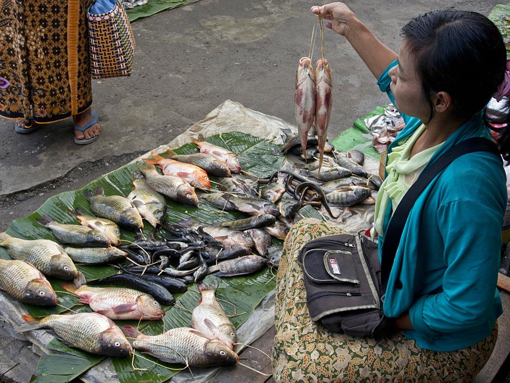 Fishmonger at market place, Inle Lake, Shan State, Myanmar (Burma), Asia