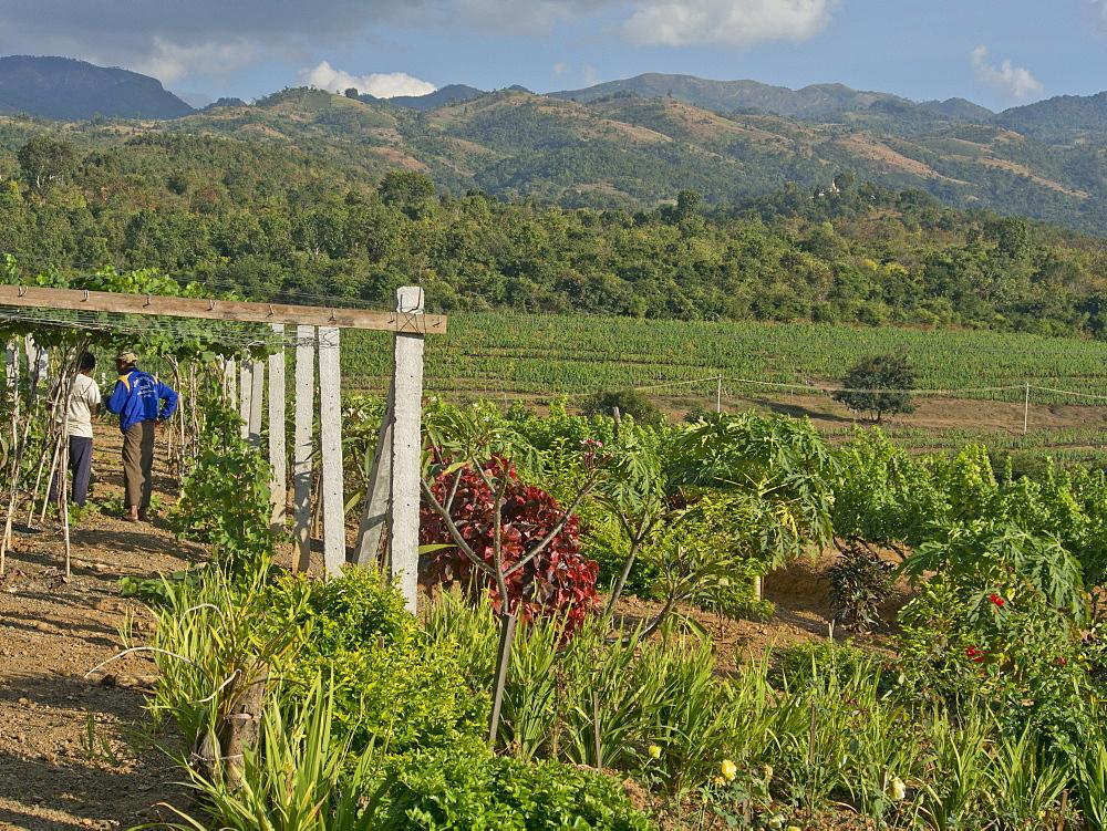 Red Mountain winery near Inle Lake, Shan State, Myanmar (Burma), Asia
