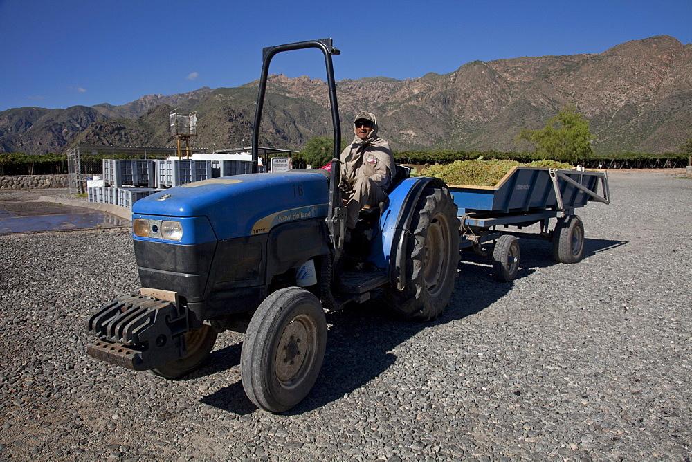 Etchart vineyard in Cafayate region, Salta, Argentina, South America