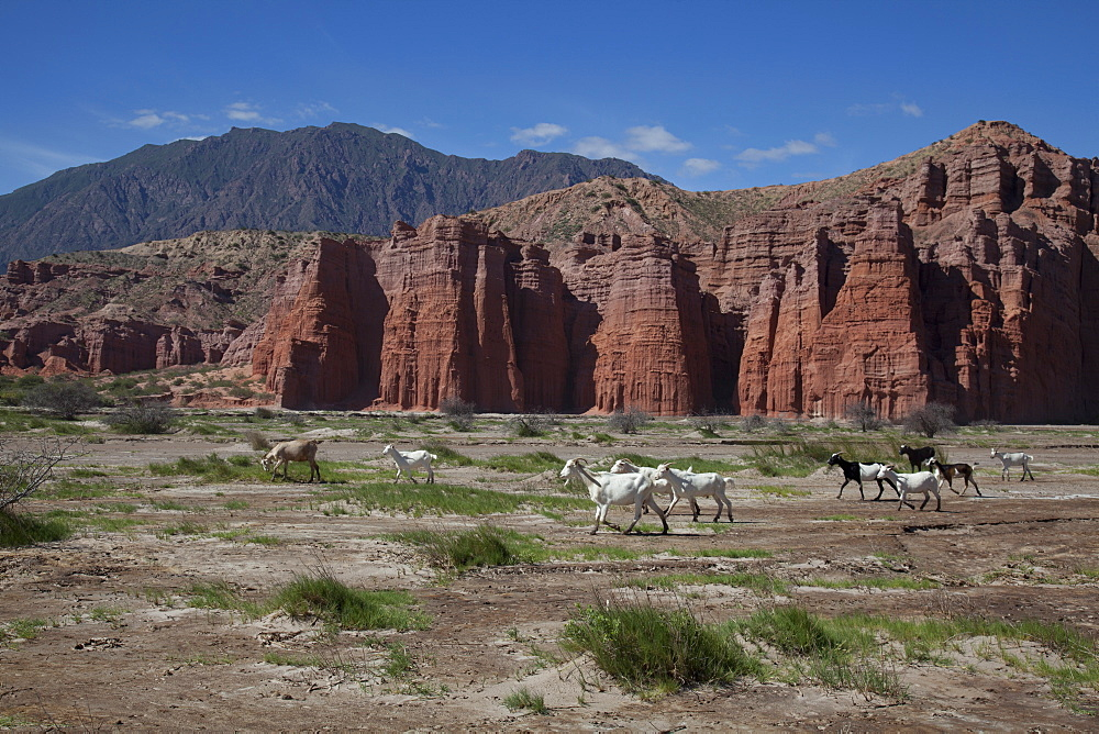 Rock formations in the foothills of Andes in Cafayate region, Salta, Argentina, South America