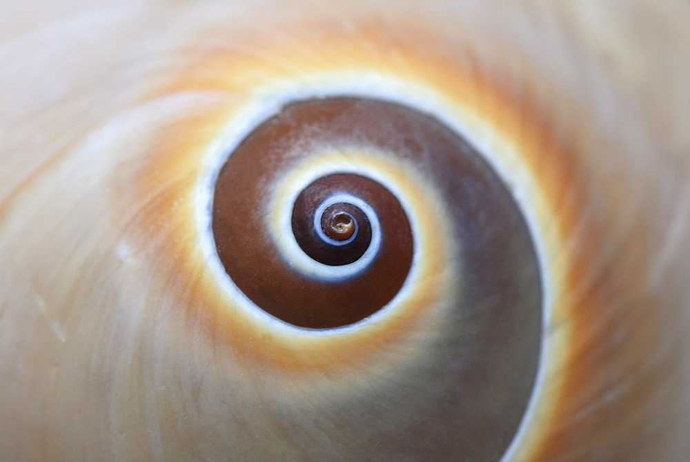 Snail, snail shell, studio, switzerland