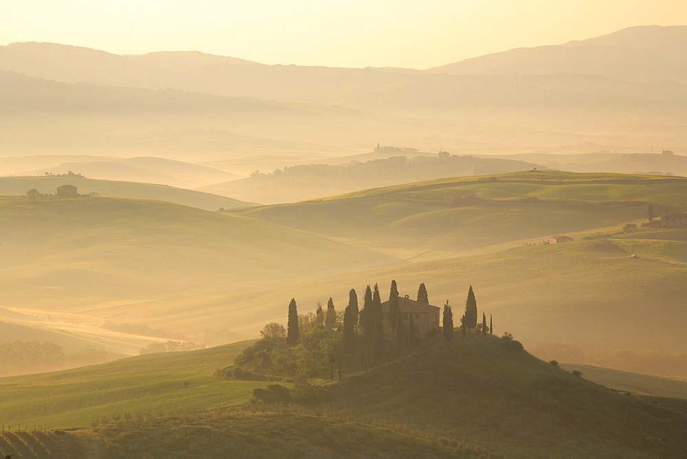 Cypress, italian cypress, cupressus sempervirens, country house, farm house, hill countryside, agricultural landscape, tuscany. italy