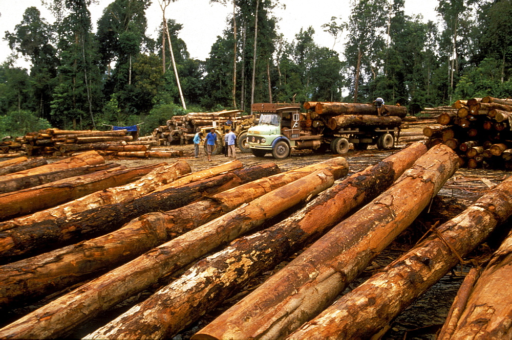 Logging, malaysia. Borneo. Timber from the rainforest