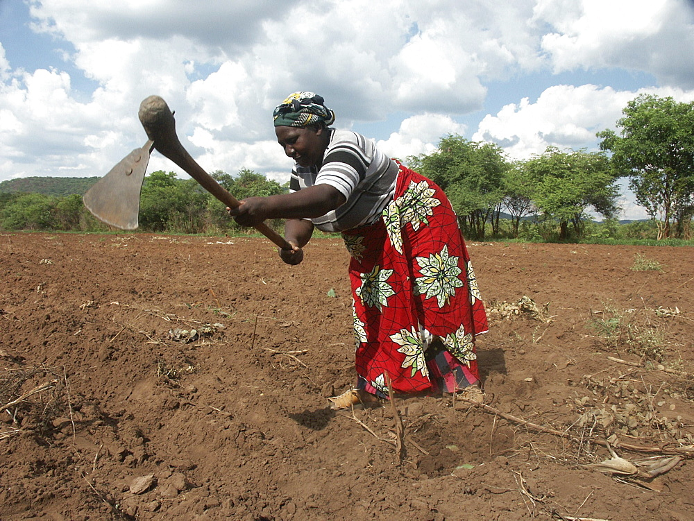 Zambia rita hamusokwe (58), farmer of chikwela village, chongwe, cultivating her field