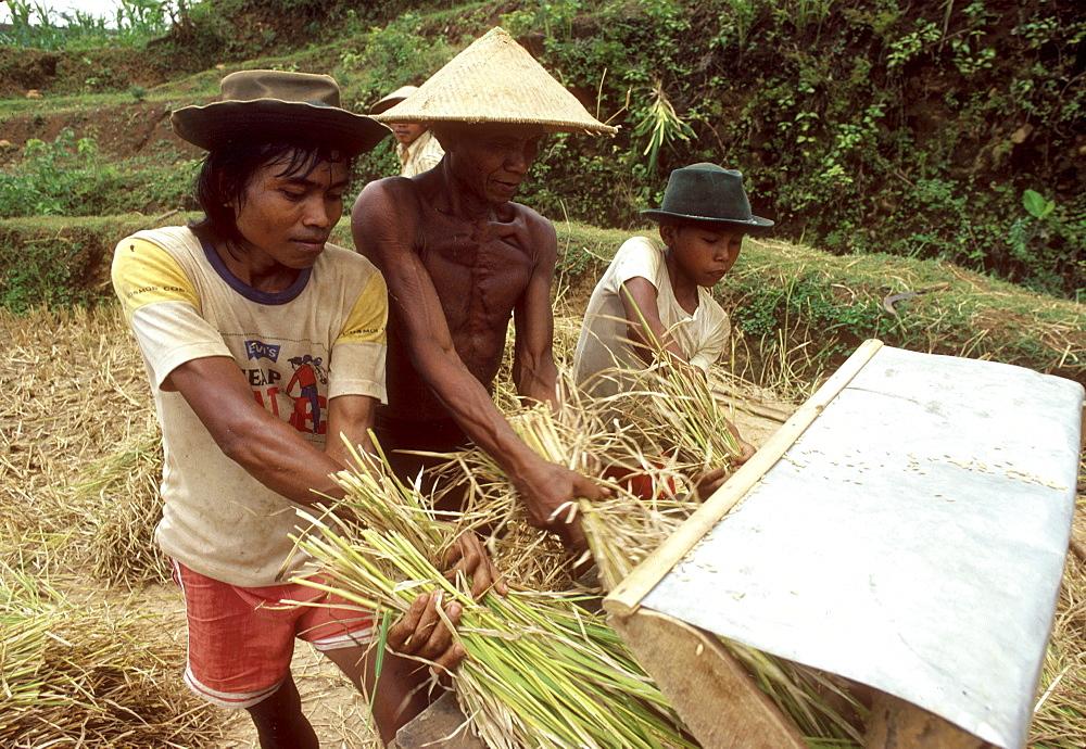 Indonesia threshing a operated treddle