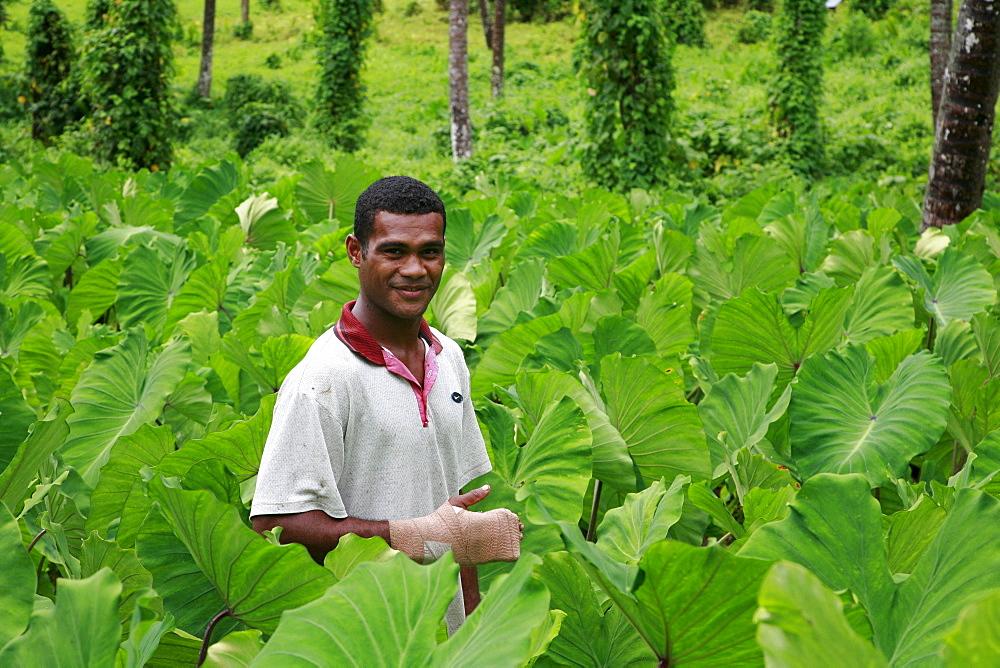 Fiji atanasio dianiroue, 24, in his taro field, taveuni photo by sean sprague