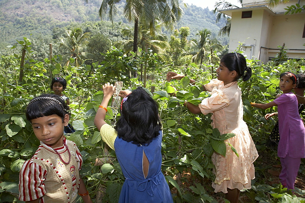 India. Girls working in vegetable plot. Mary matha bala bhavan, a girls orphanage run by syro-malabar catholic missionary sisters of mary immaculate (msmi), chamal village, thamarassery diocese, khozikode, kerala. 2007
