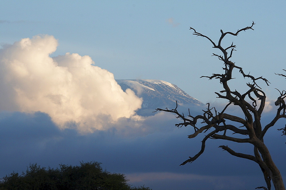 Kenya. Sunset landscape with trees and mount kilimanjaro in background. Amboseli national park