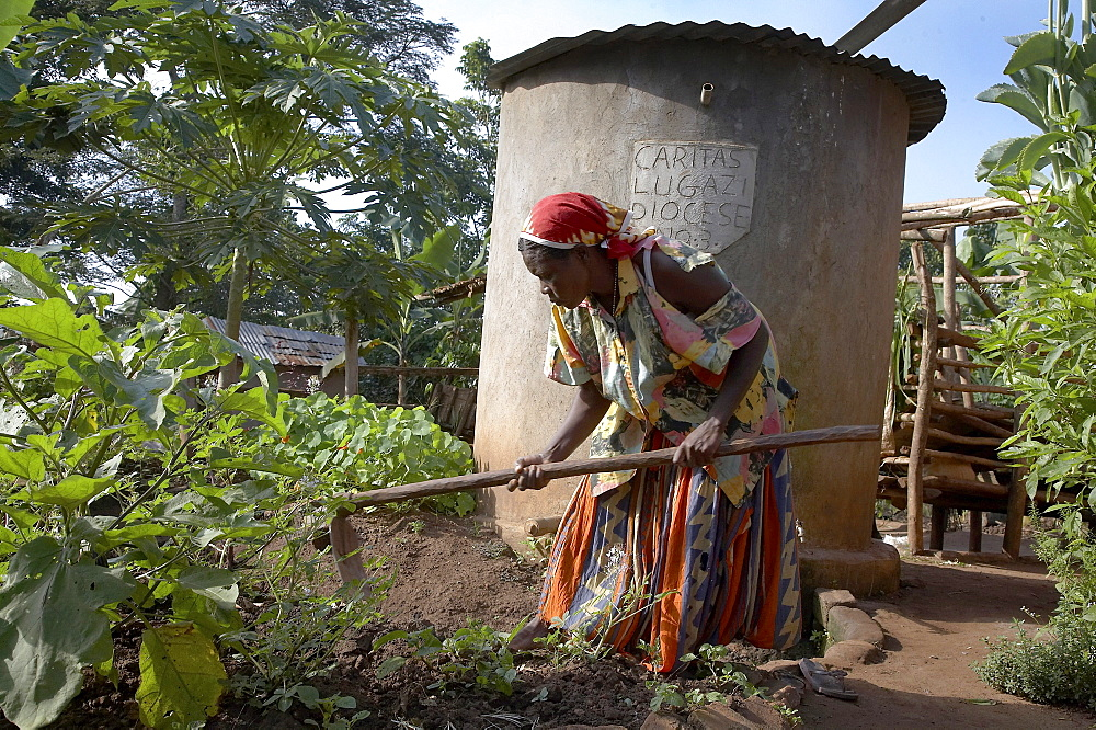 Uganda in the home of najjemba teopista, farmer of kasaayi village, kayunga district. teopista cultivating the garden. a rainwater harvesting tank stands in background