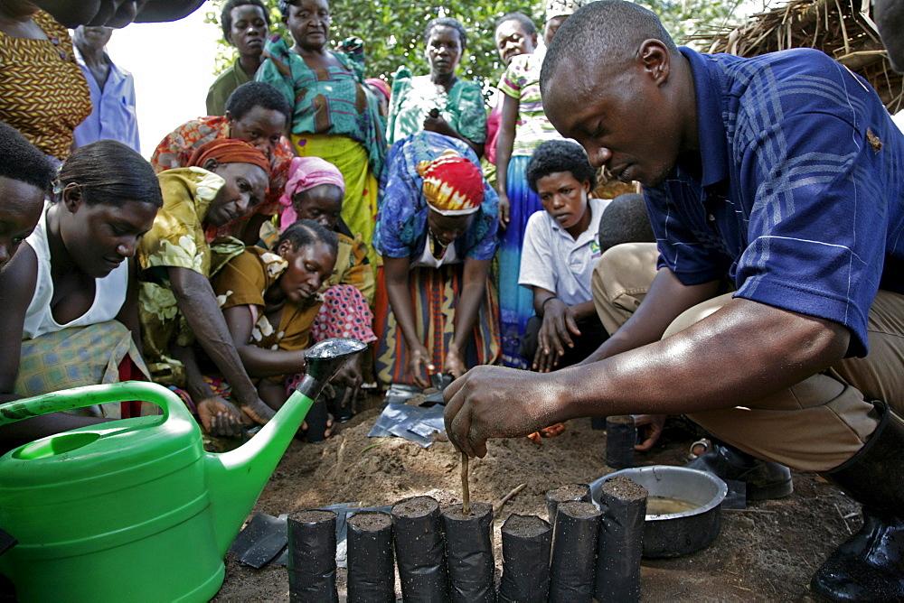 Uganda tree nursery project in kisoga run by caritas lugazi, kayunga district. preparing plastic pots for planting tree seeds