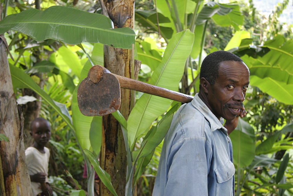 Tanzanian man carrying hoe as he walks to his fields to start cultivating bananas and other crops, mvango village, same, in the north-east near kilimanjaro