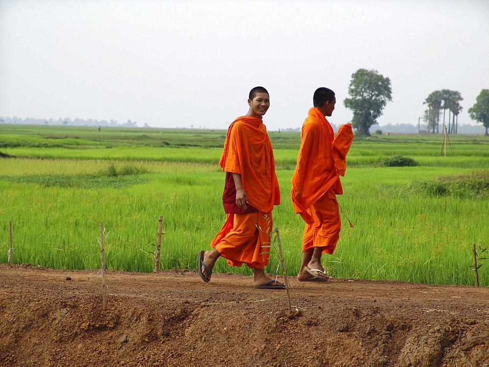Cambodia buddhist monks walking along paddy field, kampong cham