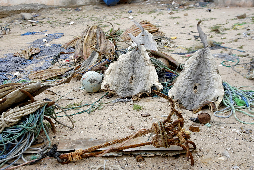 Eyl is a town in somalias puntland state. The prominent clan in eyl district are yonis idiris, a sub-clan of isse mahamud, which in turn is a sub-clan of majeerteen. Eyl is near the hafun peninsula, the location of most of somalias casualties from the 2004 indian ocean tsunami., the tsunami resulted in the death of some 300 people and extensive destruction of shelters, houses and water sources as well as fishing gear. The livelihoods of many people residing in towns and small villages along the somali indian ocean coastline, particularly in the northern regions, were devastated, /shark fishing is main source of income for many of the somalis fishermen. sharks skin drying in eyl