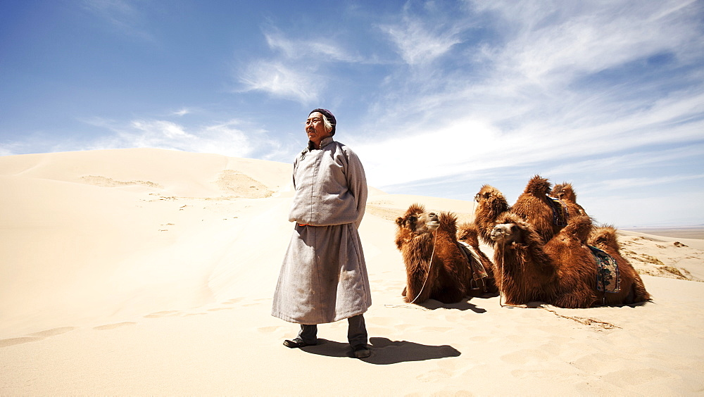 A Mongolian camel herder stands proudly in front of his camels in the middle of the sand dunes of the Gobi Desert. Mongolia, Central Asia, Asia - 1195-111