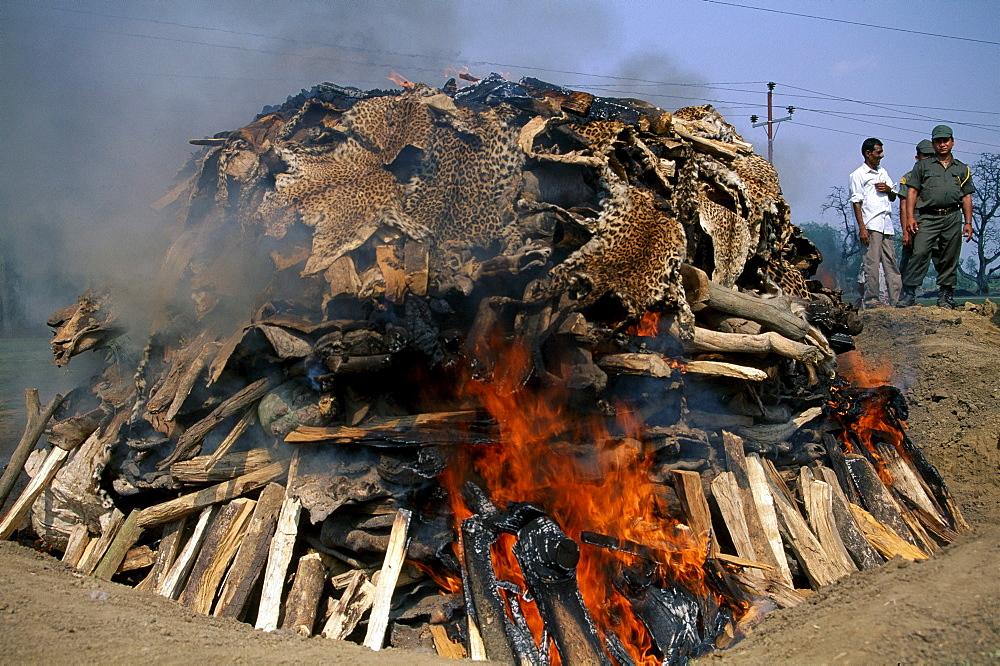 Burning hide, nepa