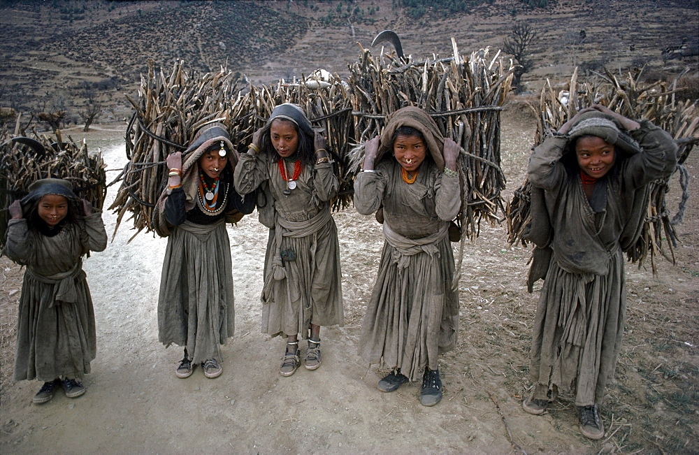 Chhetri girls carry firewood. Humla, north-west nepal  - 1196-232