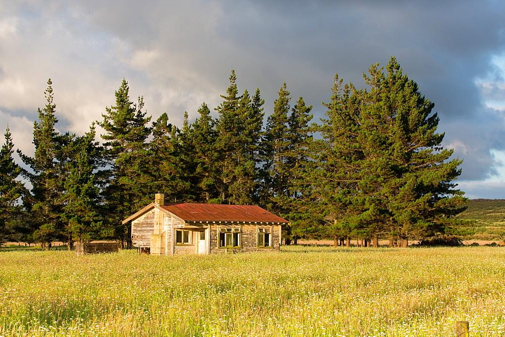 Abandoned house, near Awanui, North Island, New Zealand, Pacific