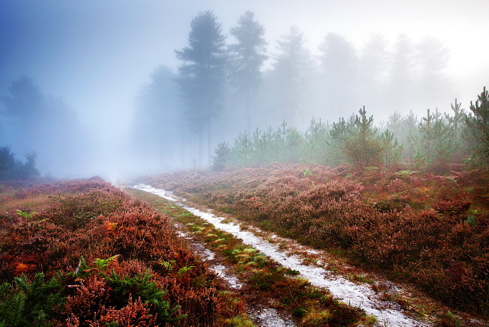 Beautiful Moreton Forest in Dorset photograph