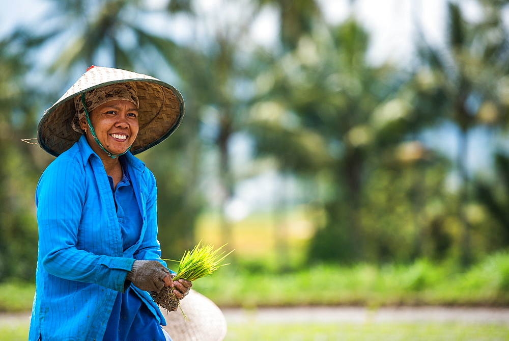 Woman working in a Padi Field, Sumatra, Indonesia, Southeast Asia