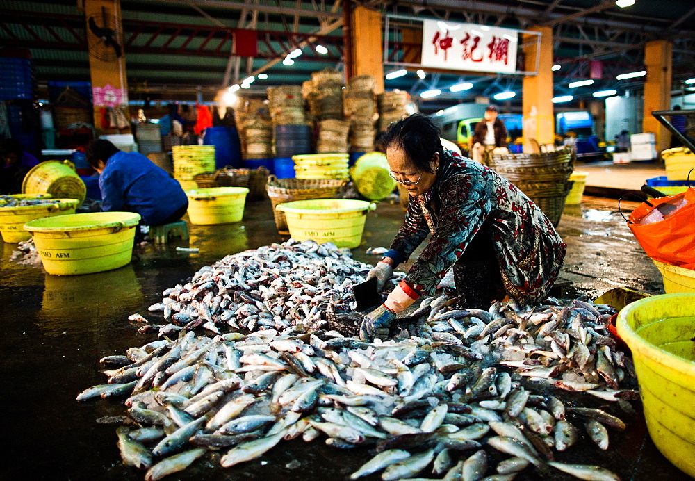 Aberdeen Fish Market, Hong Kong, China, Asia