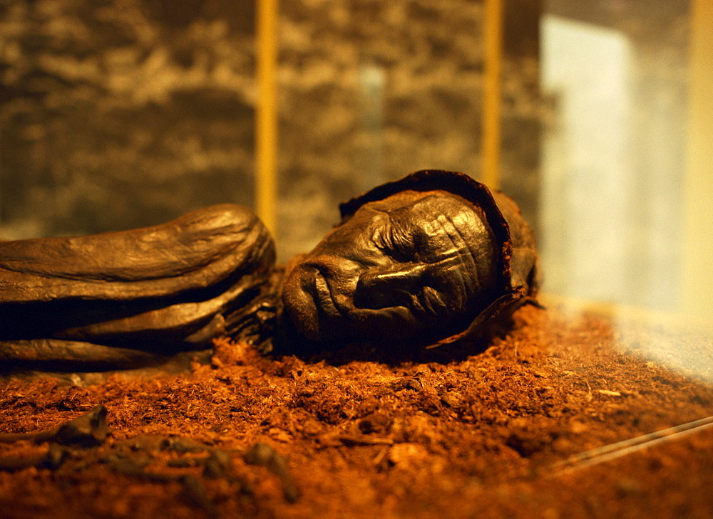 Tollund man found in a nearby peat bog in the Silkeborg museum in central Jutland, Denmark, Scandinavia, Europe