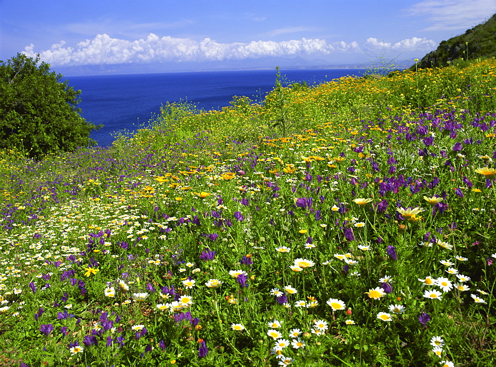 Wild flowers in spring in Zingaro Nature Reserve, Sicily, Italy, Mediterranean, Europe