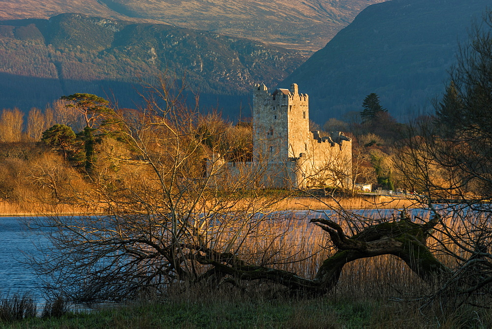 Ross Castle, Killarney National Park, County Kerry, Munster, Republic of Ireland, Europe - 1200-44