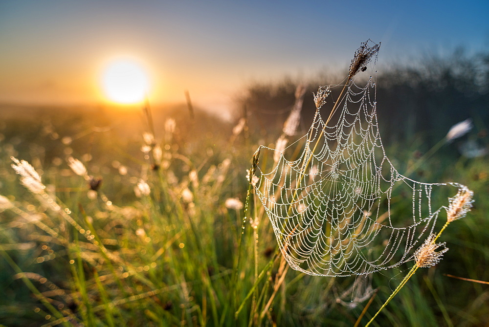 Dew covered spiders web, at sunrise, North Kent Marshes, Kent, England, United Kingdom, Europe