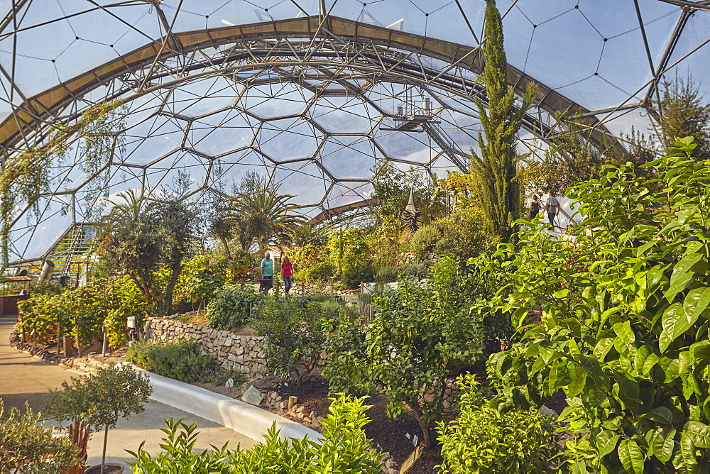 A view inside the Mediterranean Biome, covered by its huge dome, at the Eden Project, near St Austell, south Cornwall.