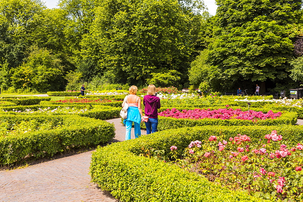 People walking in the rose garden in Vondelpark, Amsterdam, Netherlands, Europe