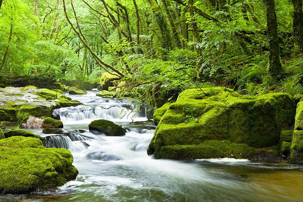 River Fowey, Golitha Falls, Looe, Cornwall, England, United Kingdom, Europe - 1207-27