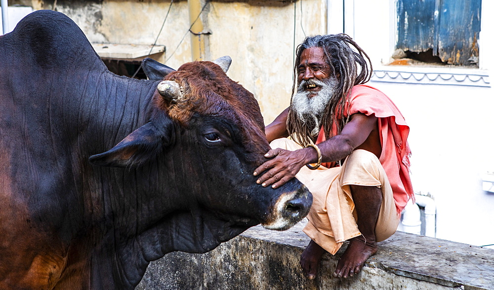 A local man and a buffalo in Udaipur, Rajasthan, India, Asia