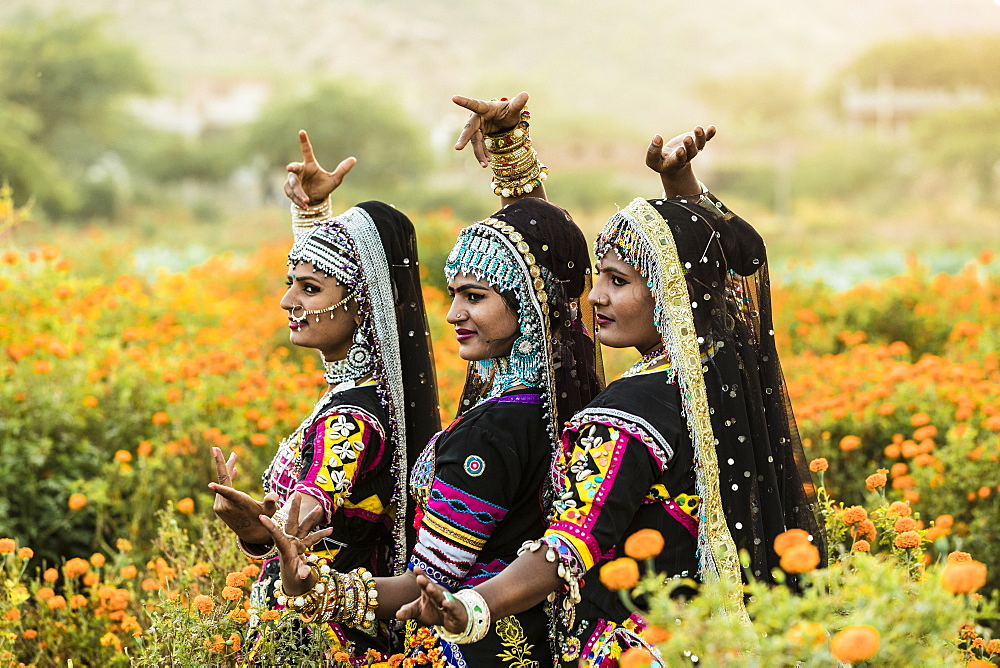 Local dancers in a marigold farm in Pushkar, Rajasthan, India, Asia