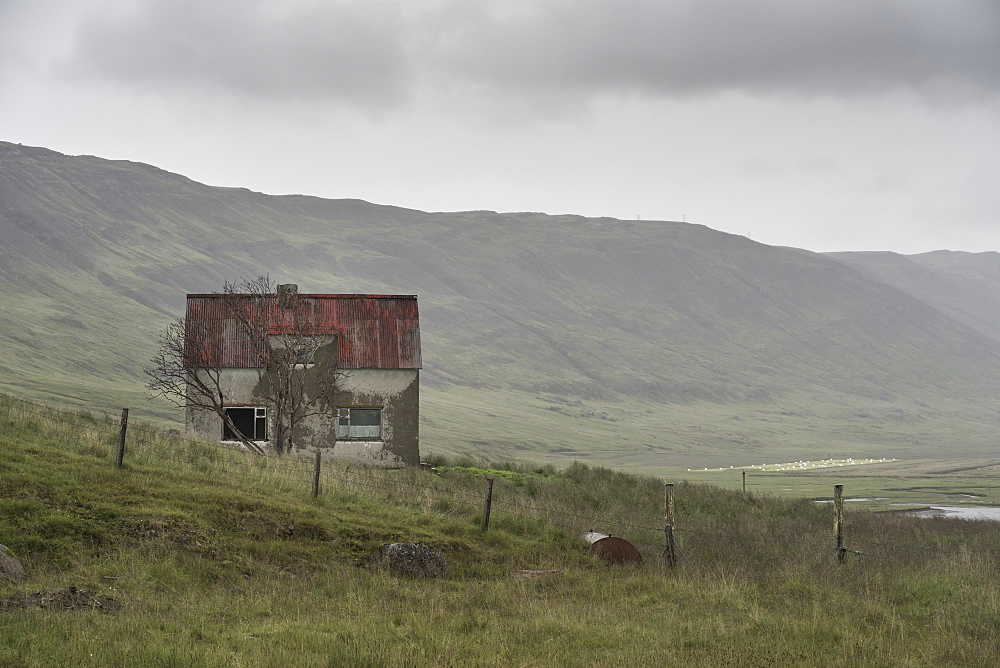 Abandoned farmhouse, Westfjords, Iceland, Polar Regions - 1209-112