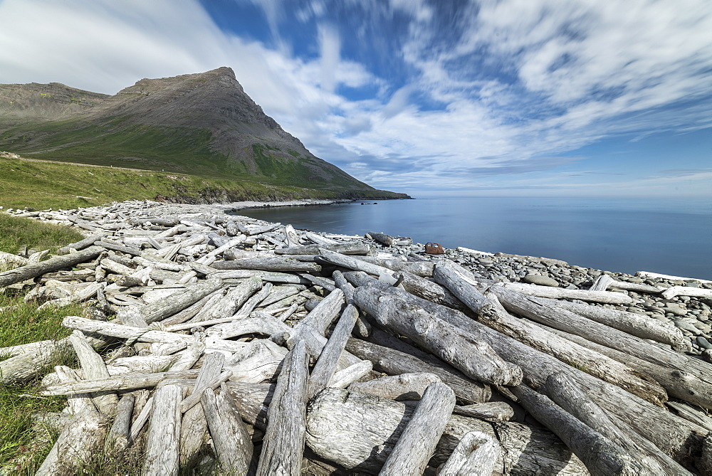 Driftwood from Siberia, Strandir Coast, Westfjords, Iceland, Polar Regions