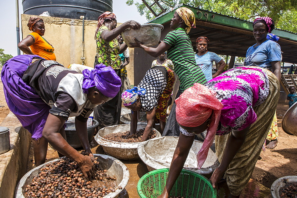 The women of Kasalagu Womens Cooperative washing Shea nuts to make Organic Shea butter for Tama, Tamale, Northern Region, Ghana, West Africa, Africa