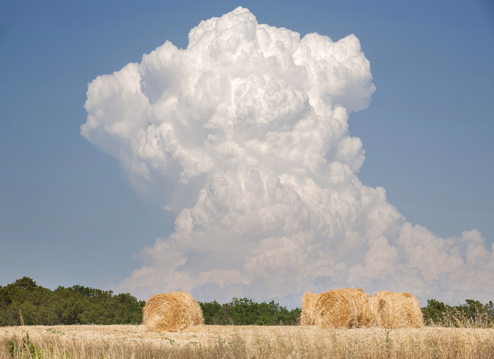 Billowing cloud over a wheat field, France, Europe