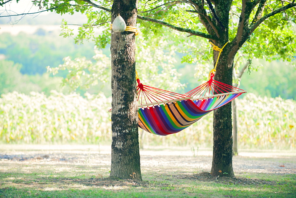 Hammock between two young oaks in a shady French garden, France, Europe