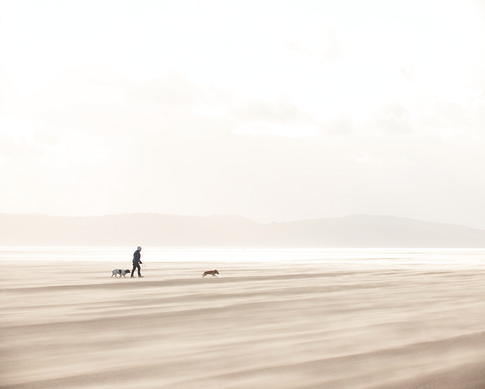 Woman walking with dogs across a windy beach with dry shifting sands creating a cloud underfoot, West Kirkby, Wirral, England, United Kingdom, Europe