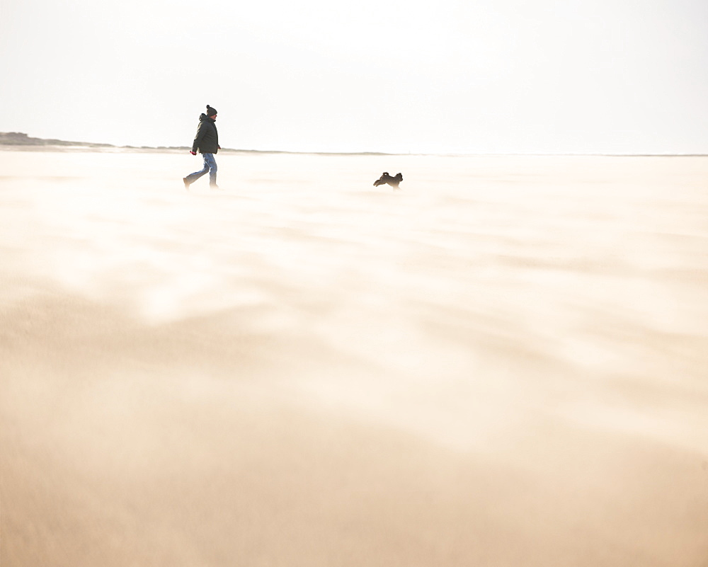 Man walking with dog across a windy beach with dry shifting sands creating a cloud underfoot, West Kirkby, Wirral, England, United Kingdom, Europe